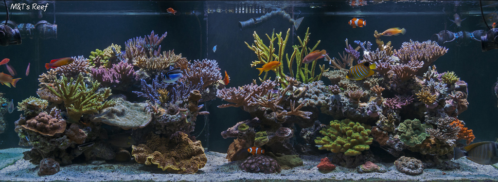 Mike&Terry's 300g Reef