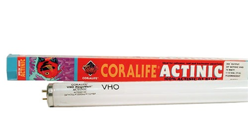 coralife-75w-actinic-24-inch-vho-fluorescent-lamp-t12-500x278