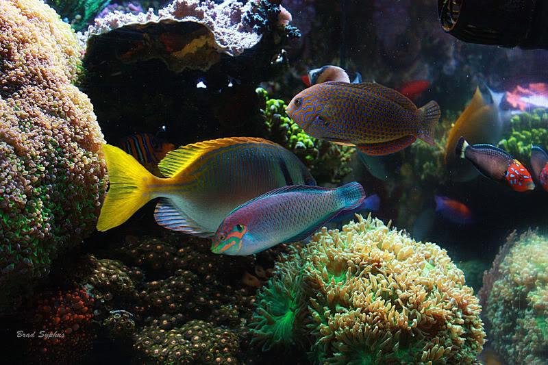 image via reef2reef member Brad Syphus