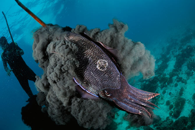 cuttlefish ink image via http://ngm.nationalgeographic.com