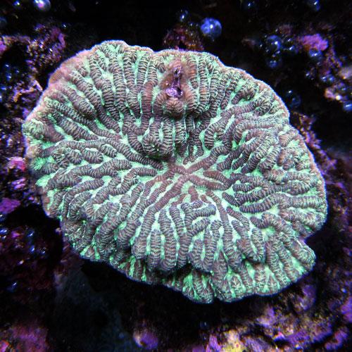 image via thatpetplace.com