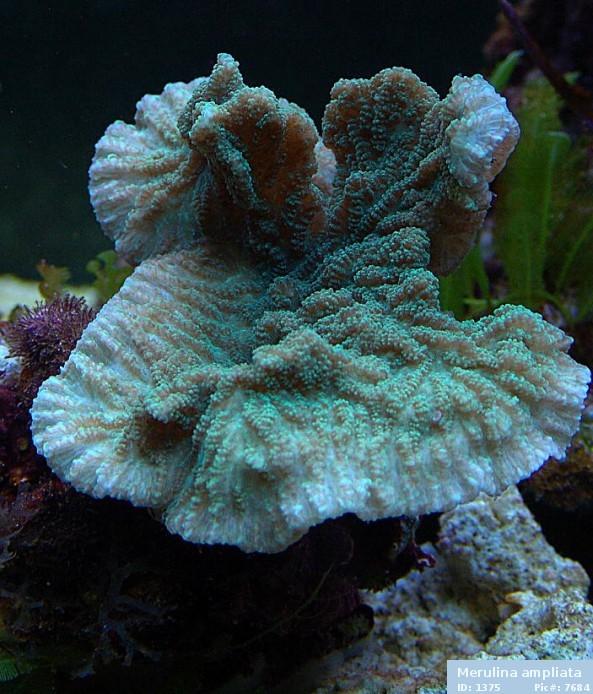 image via reeflex.net
