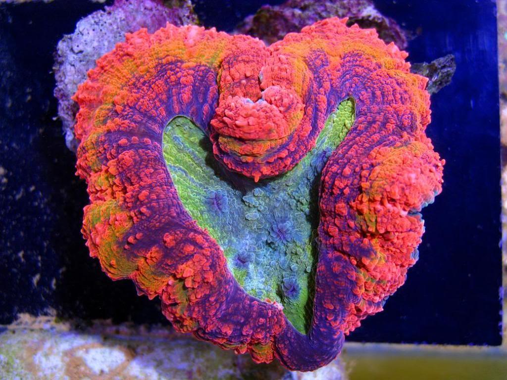 image via Sexy Corals