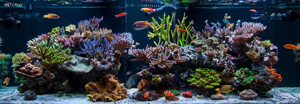 How To Set Up A Saltwater Reef Aquarium Tank Reefedition