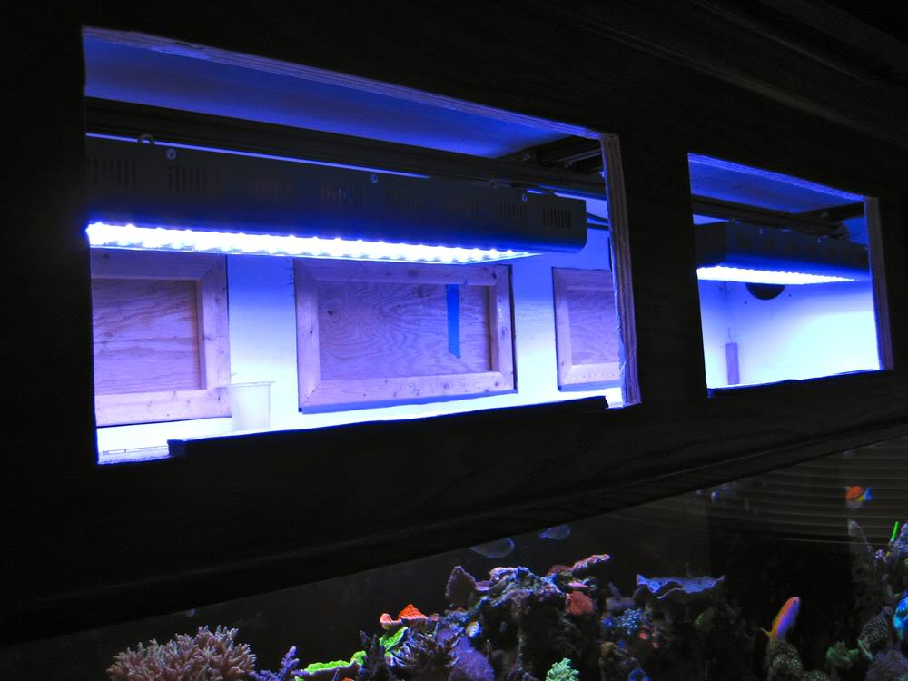 led lighting mounted in tank canopy image via reef2reef member reefkoi