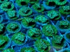image via Unique Corals