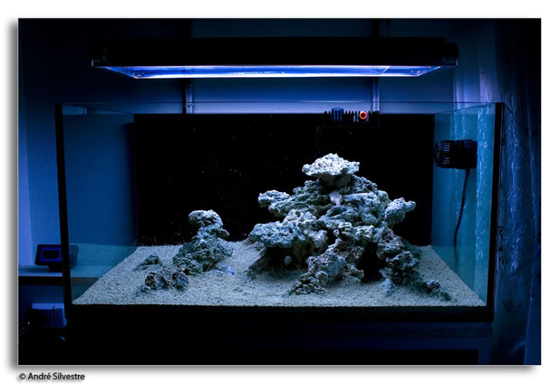 How to set up a saltwater reef aquarium tank reefedition for How to start a saltwater fish tank