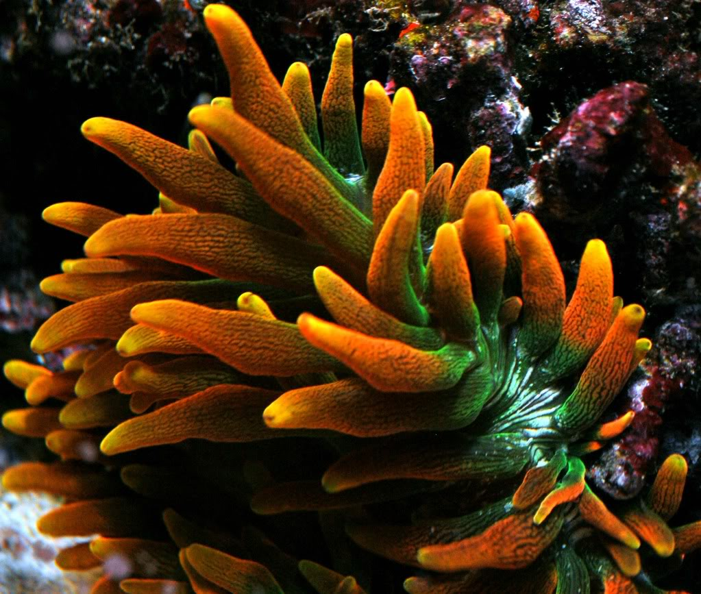 image via reef2reef member Reefer831