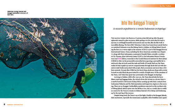 Into the Banggai Triangle opening spread.