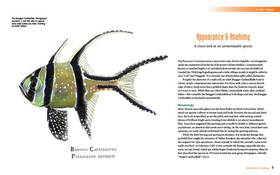 A Banggai Cardinalfish book sneak peek – the opening spread for the Appearance & Anatomy chapter, featuring artwork by project artist Karen Talbot.