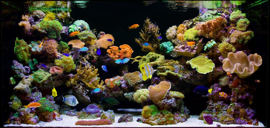 This reef doesn't suck. Or does it?