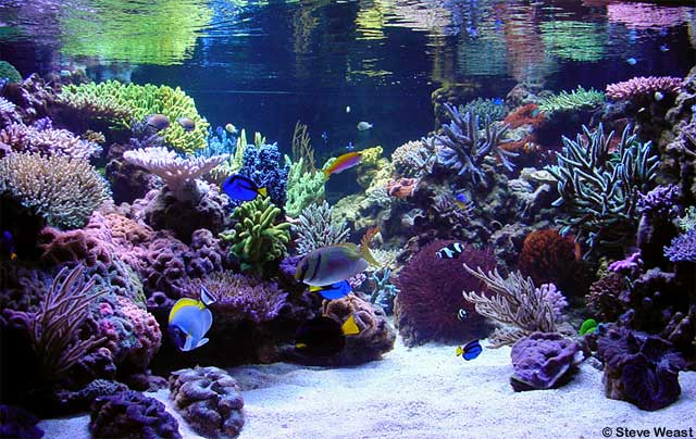 How to tell if your saltwater reef aquarium sucks - Fotos de acuarios decorados ...