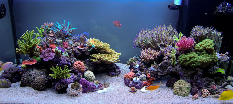 Dosing Rules Dosing 101 For Your Reef Aquarium Reefedition