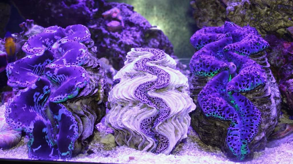 image via reef2reef member FishLipz