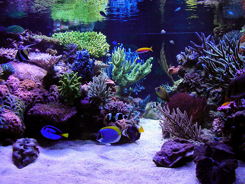 Steve Weast's Reef Aquarium nice and clean
