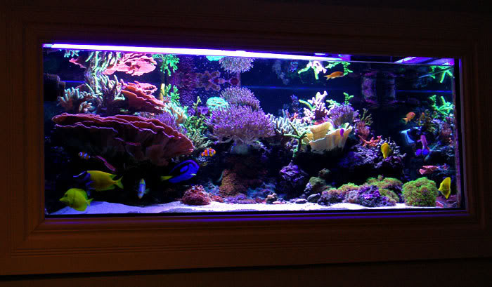 Modular In Wall And Peninsula Design Aquarium Reefedition