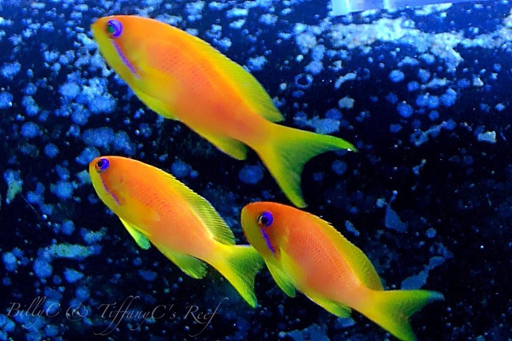 female image via reef2reef member BillyC
