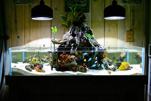 kyle verry's 75g custom rimless reef tank