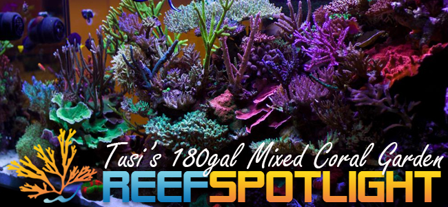 Reef Spotlight Mag Featured Image