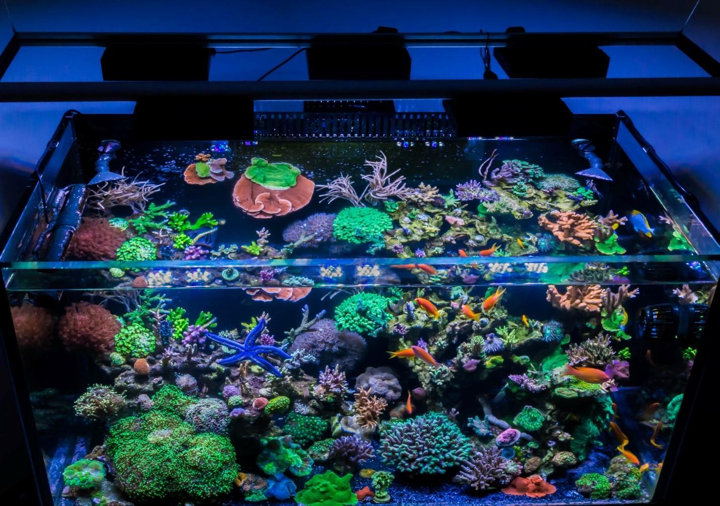 Reef Spotlight Bret Hartman S 120g Reefedition