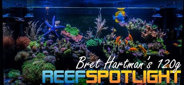 Reef Spotlight