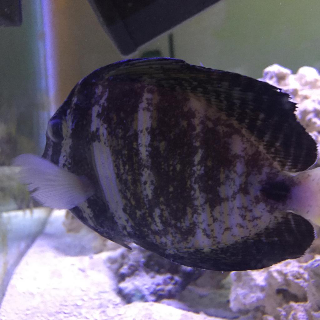 Fish tank antibiotics - 2